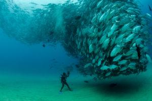Fish in Cabo Pulmo